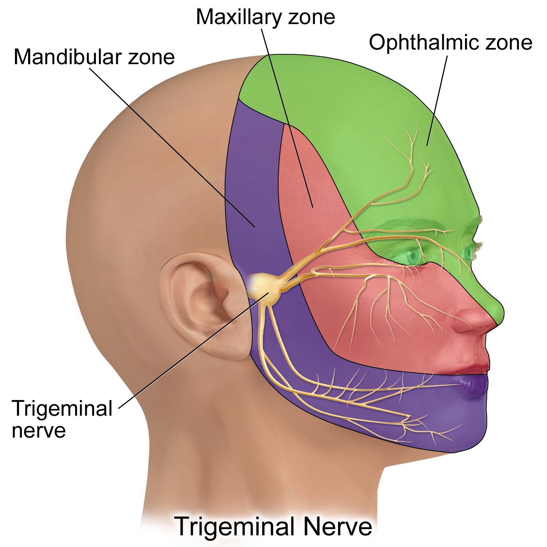 آلام العصب الخامس Trigemnial Neuralgia والعلاج في ألمانيا